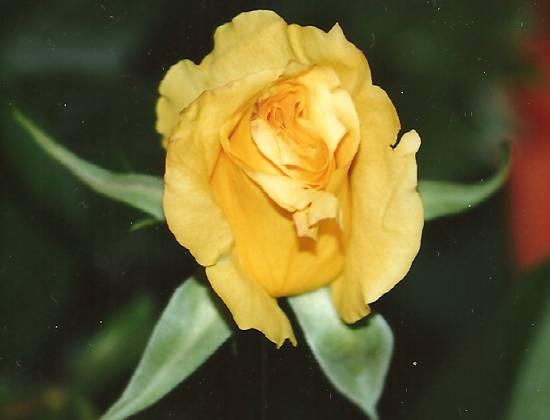 I fiori di .....