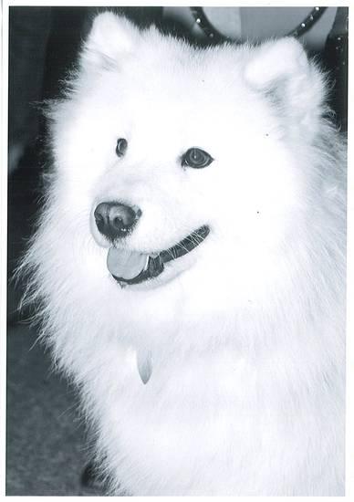 Principessa pelosa in bianco e nero