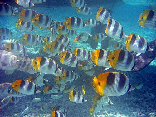 Foto pesciolini colorati dall 39 album foto profilo di eliisa for Immagini pesciolini