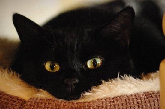 Condividi la foto gatto addormentato dall 39 album gatti di for Buongiorno con gattini