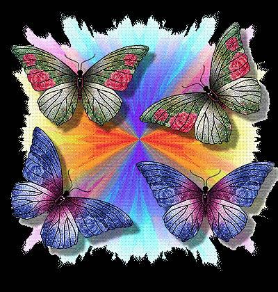 foto farfalle colorate dall 39 album foto profilo di