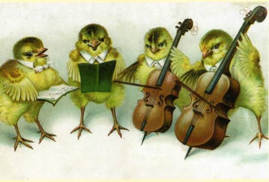 canarini canto