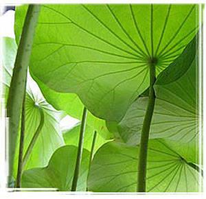 foglie1