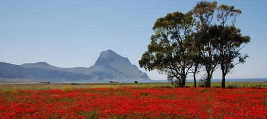 tulipani paesaggio