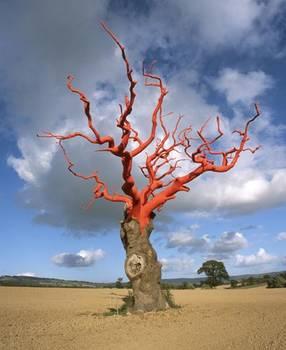 albero-colorato
