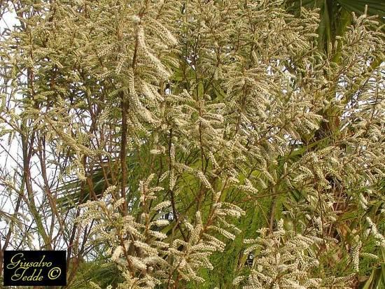 Pianta con foglie rosse e pianta con foglie ad aghi e for Pianta con foglie rosse