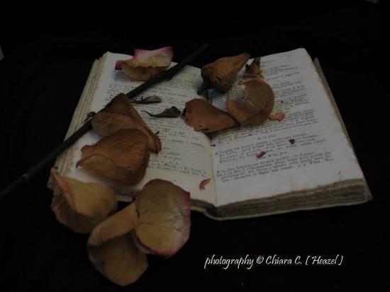 petali caduti_IMG_6518