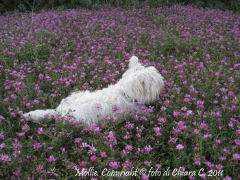 Mollie.IMG_6037