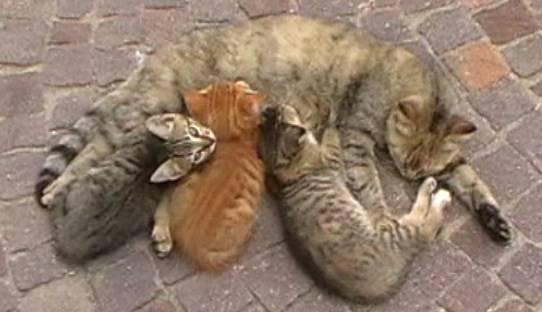Mici in famiglia