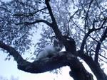 Micio sull'albero
