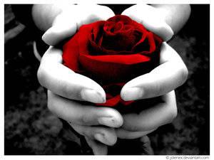 Condividi la foto donare un fiore dall 39 album foto profilo for Donare un giardiniere