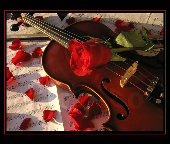 Foto Violino Rosa Dallalbum Rose Cuori Giardini 4 Di LaylaPrincipessa Su Libero Community