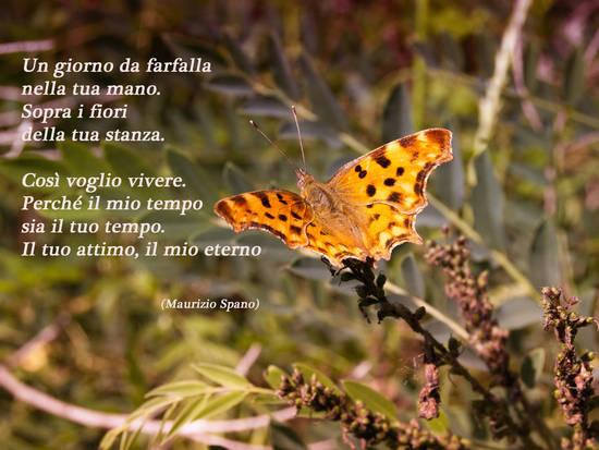 Un giorno da Farfalla