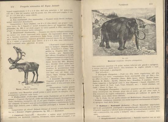 anatomia fisiologia e classificazione degli animali