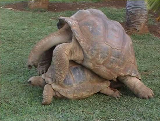 foto tartarughe in amore dall 39 album foto profilo di