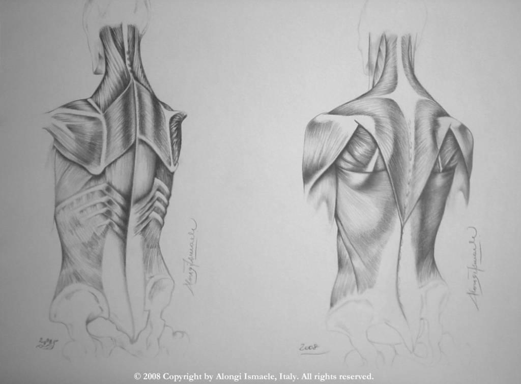 Studio anatomico multiplo dei muscoli dorsali del torso del corpo umano, 2008, Ismaele Alongi, cm 33 x 48, matita su cartoncino