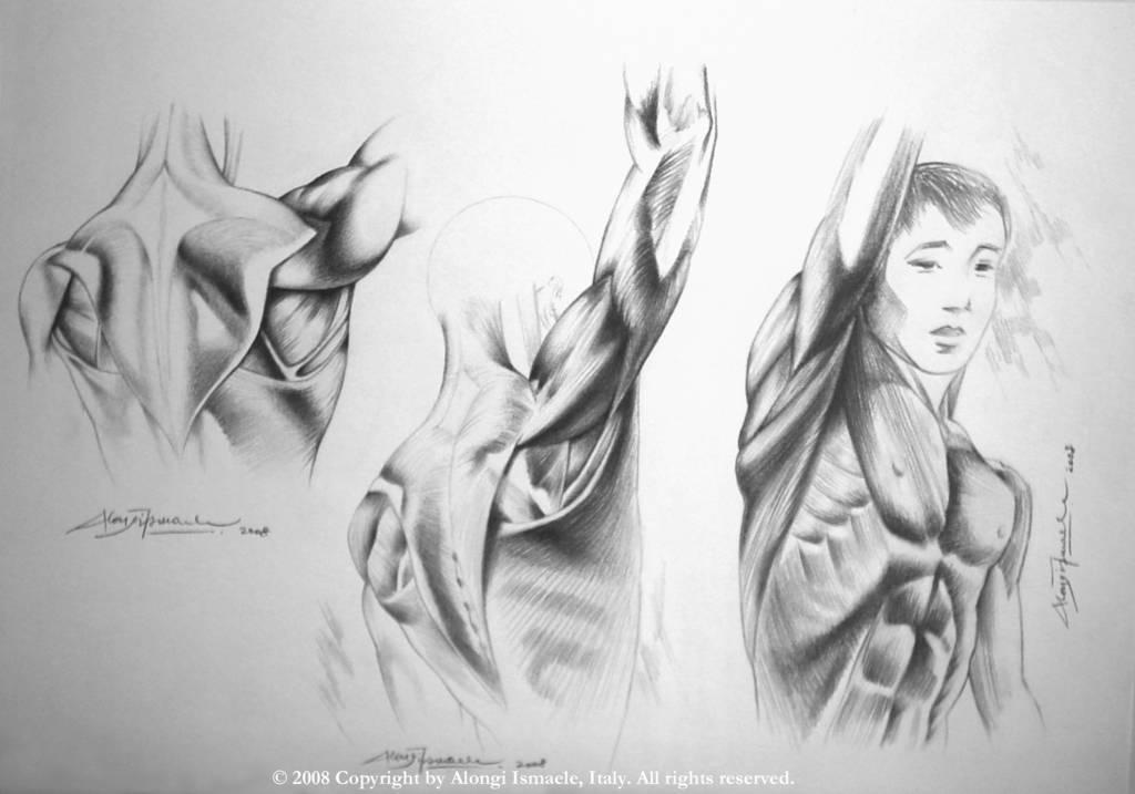 Studio anatomico multiplo dei muscoli del torso del corpo umano, 2008, Ismaele Alongi, cm 33 x 48, matita su cartoncino