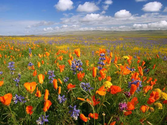 fiori campagna