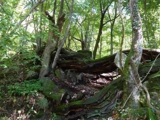 bosco e sottobosco