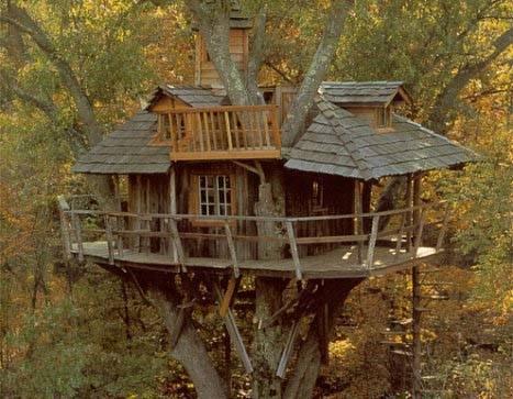 Foto casa sull 39 albero dall 39 album foto profilo di for Case in legno sugli alberi