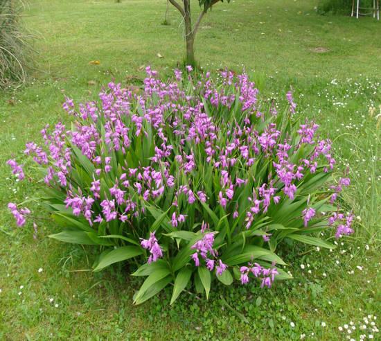 Orchidee Da Esterno.Casa Immobiliare Accessori Orchidee Da Giardino