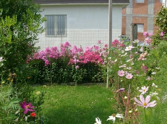 foto fiori da bordura dall 39 album foto profilo di beybe su