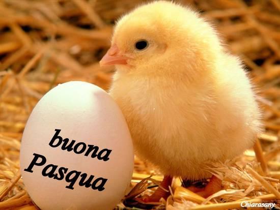 Pollito-en-Huevo