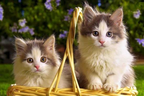 317739__cute-cats_p