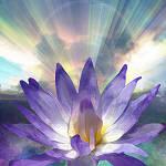 chakra-flower