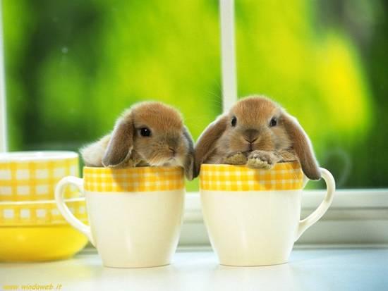 Coniglietti in una tazza
