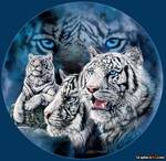White%20Tiger%20Brothers