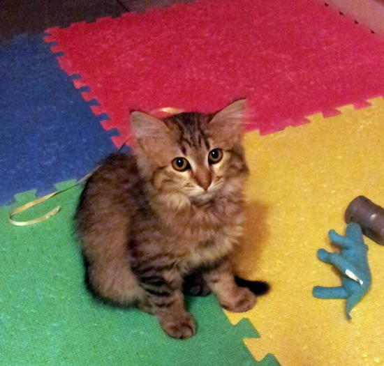 Felixeisuoi mici blog per i gatti che vivono in libert for Una casa di storie progetta le immagini