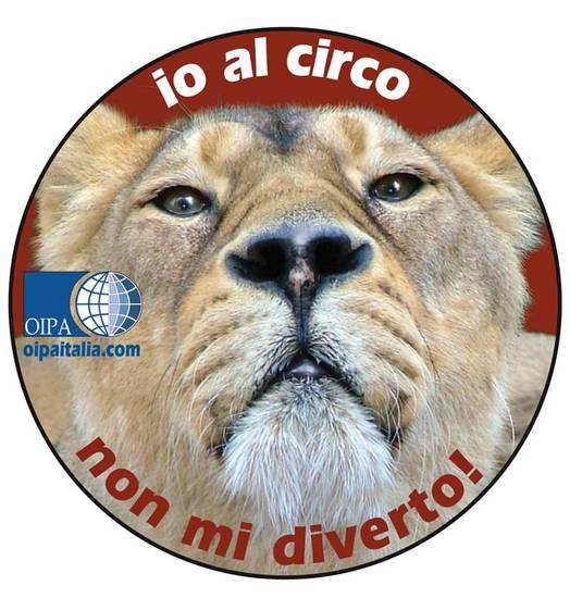No circo