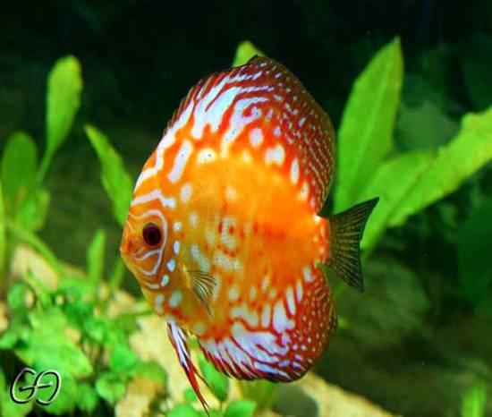 Foto pesci tropicali 02 dall 39 album foto profilo di gianpy5 for Pesci tropicali acquario