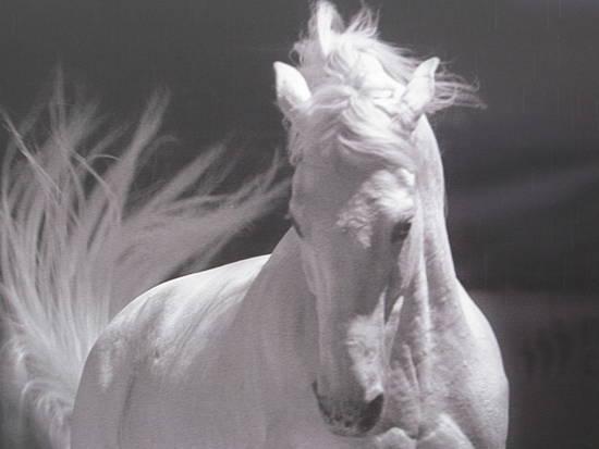 Foto fiera cavalli verona dall'album fiera dei cavalli di grazia.sana