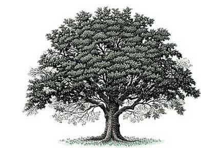 Due geni uova nani e alberi su vagheidee for Alberi alto fusto nomi