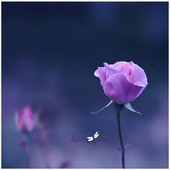 rosa the_farewell
