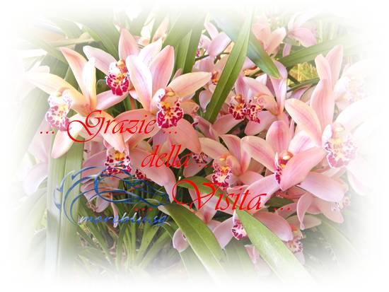 http://digiphotostatic.libero.it/mareblu.sg/med/7ed9f91a93_6014122_med.jpg
