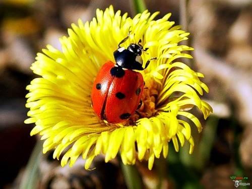 Foto porta fortuna dall 39 album fiori di markizaita su - Foto porta fortuna ...