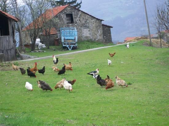 Foto fattoria di montagna dall 39 album foto profilo di for Piani di fattoria con foto
