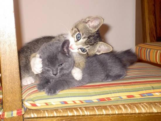 Condividi la foto gattini sul letto dall 39 album gattini di - Amici di letto chat ...