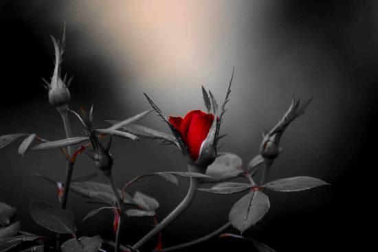 Scominigare Se Son Rose Su Naradem A Tunisi