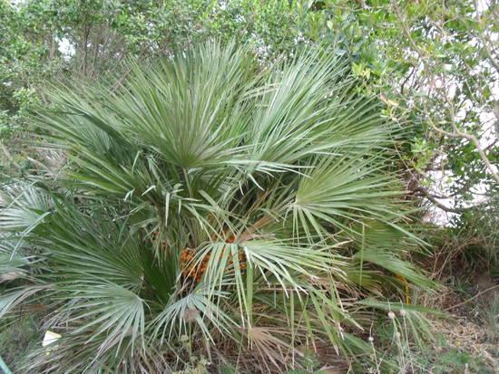 Giardino botanico su ponza inbiancoenero - Tipi di palma da giardino ...