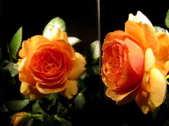 Foto allo specchio dall 39 album fiori coltivati di - Foto allo specchio ragazzi ...
