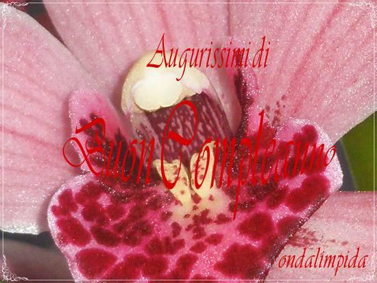 Popolare Tantissimi Auguri di Buon Compleanno :-) su Salento ti Amo GR71