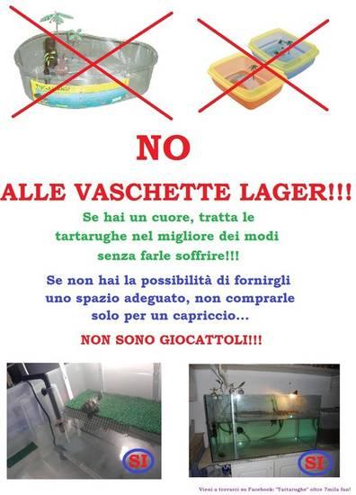 Vaschette lager su tartareptilecalabria for Tartaruga di terra maschio o femmina