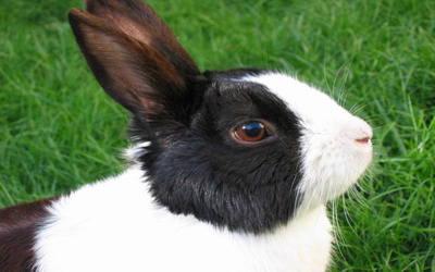 Conigli 1