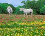 Cavalli 3