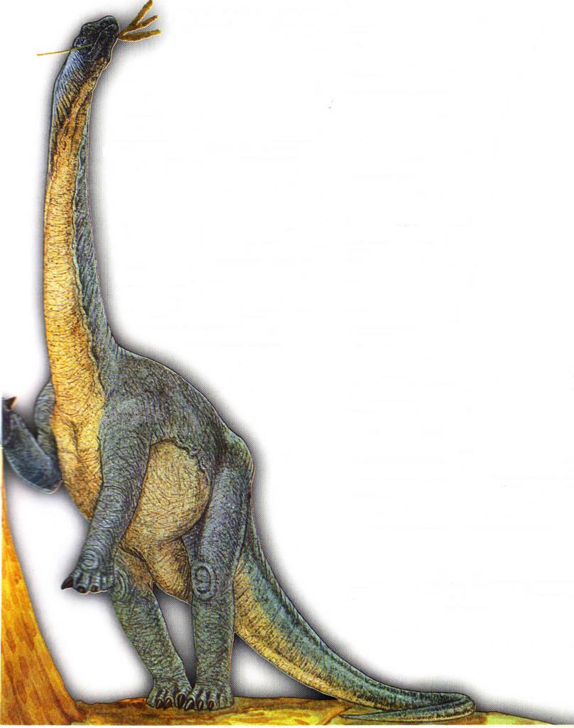 barapasaurus - photo #21