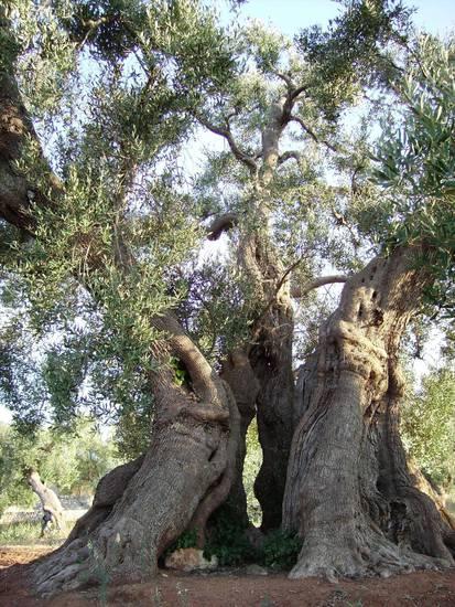 albero_2